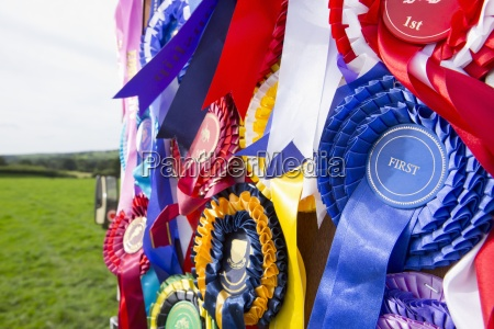 close up of equestrian rosettes hanging