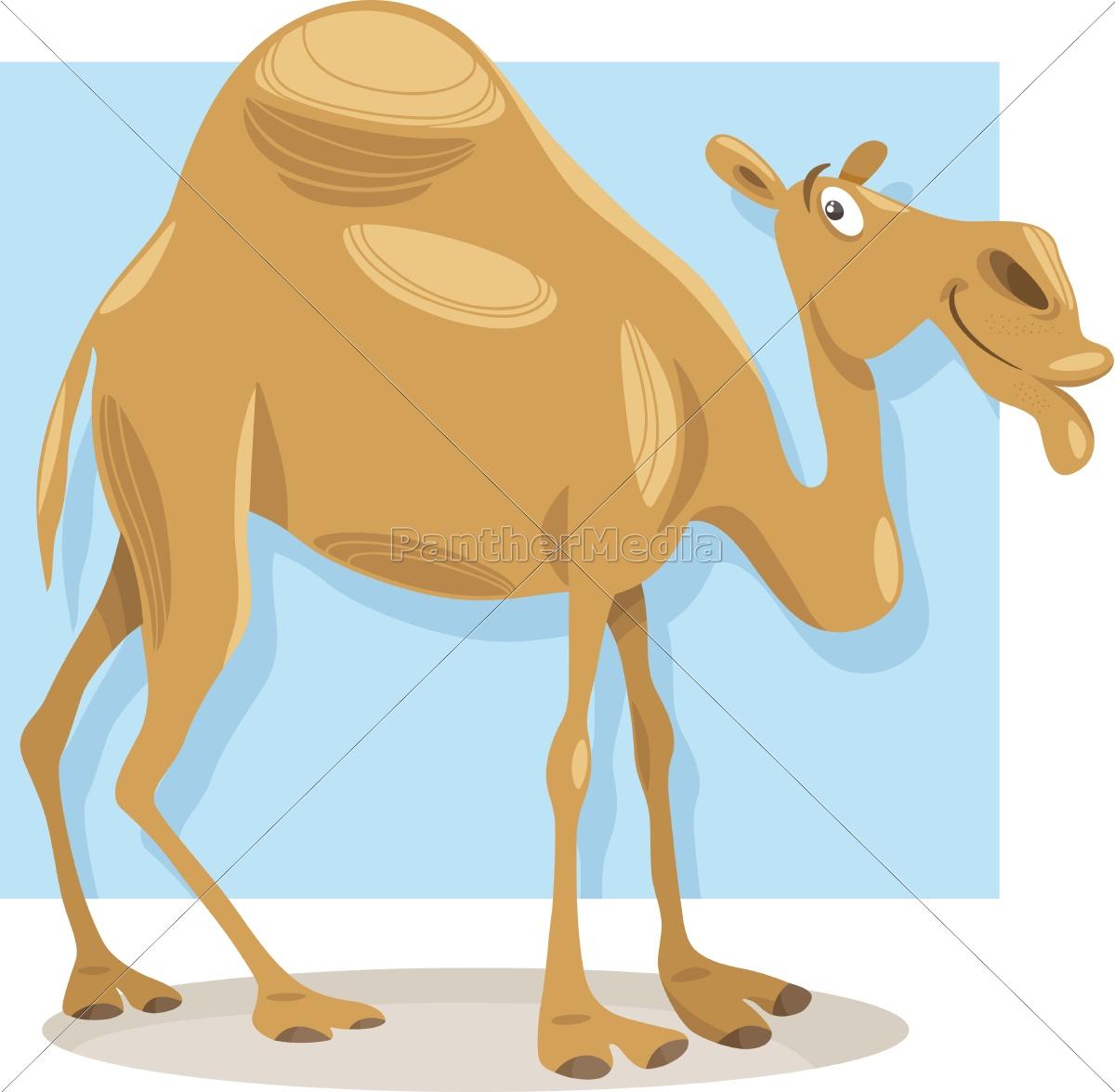 dromedary, camel, cartoon, illustration - 12928992