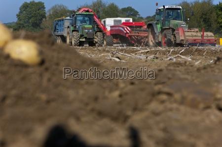 tractors harvesting potatoes in sunny rural