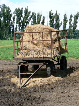 hay wagon with straw