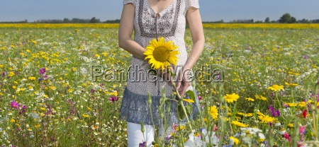 woman holding sunflower in sunny meadow