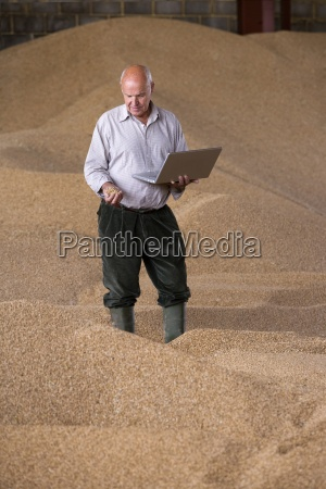 farmer holding laptop and wheat grains
