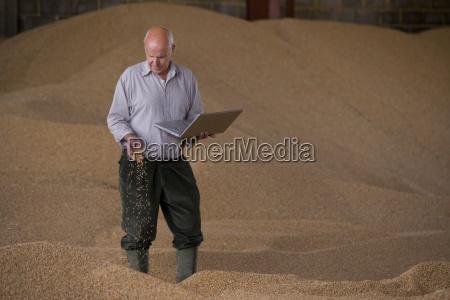 landwirt haelt laptop und weizenkoerner auf