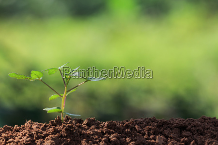 roots of young plant and sunlight