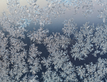 snowflakes on windowpane at early winter