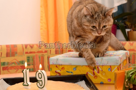 cat at birthday party