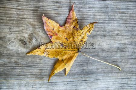 autumn leaf over wood background