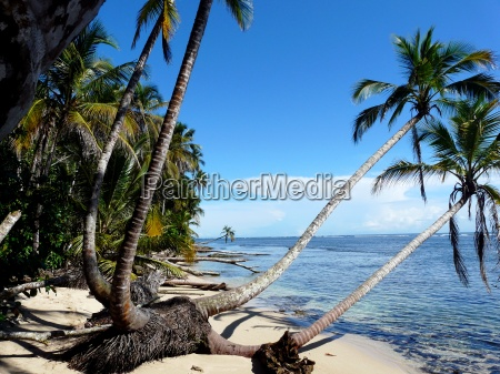 coconuts trees on the beach
