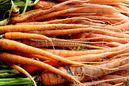 fresh organic yellow carrots background photo