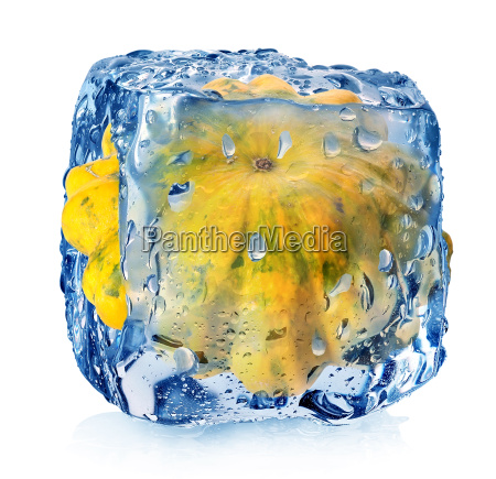 gourd in ice cube