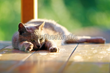 cat stretching on wooden stand