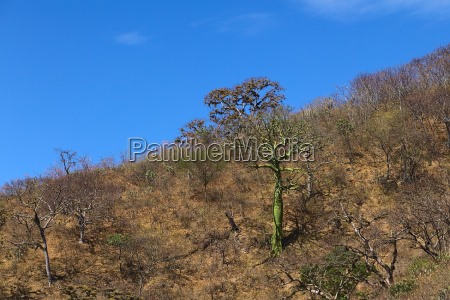 tropical dry forest in southern ecuador