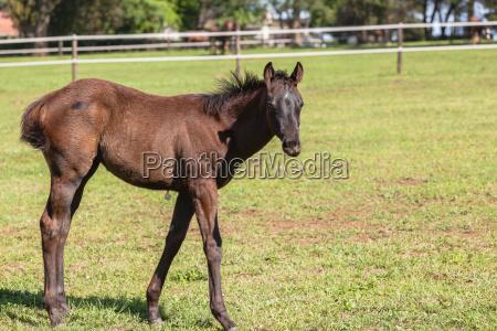 horses foals colt stud farm