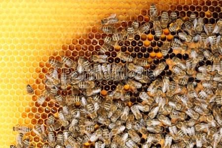 bee people on honeycomb