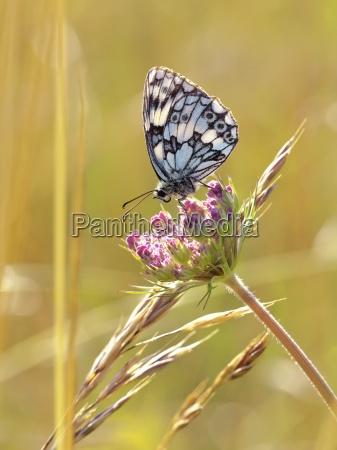butterfly - 13231290