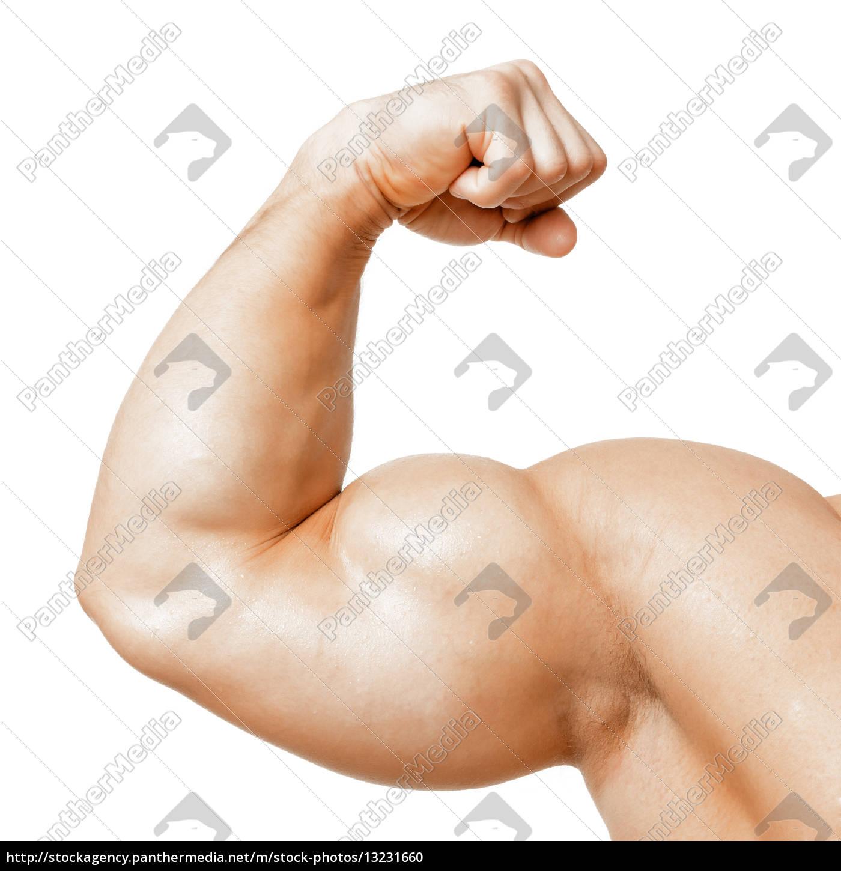 muscular, biceps - 13231660