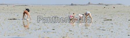 mussel collectors