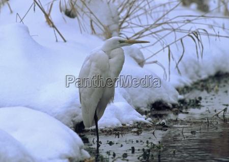 animal bird birds pointed beak feathering