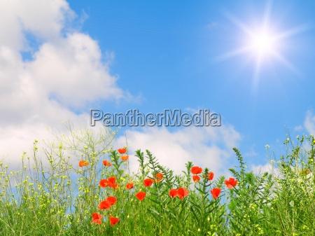 greenfield on blue sky