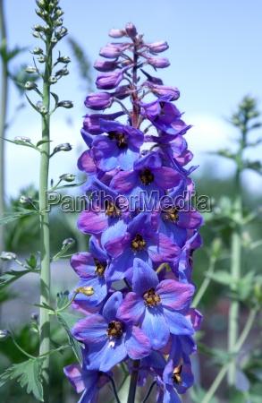 azul flor planta verde lindas flores