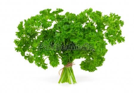 fresh green parsley on a white