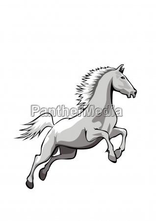 horse white big