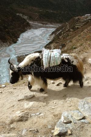 viaggiare montagne vacanza vacanze animale mammifero