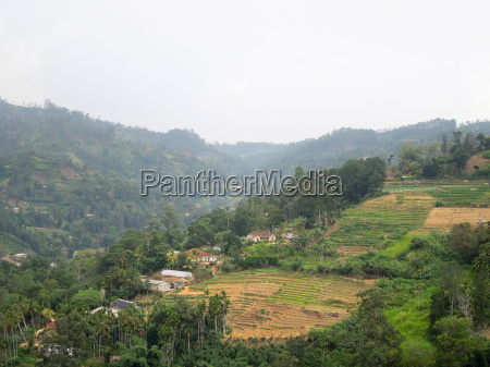 agricultural scenery in sri lanka