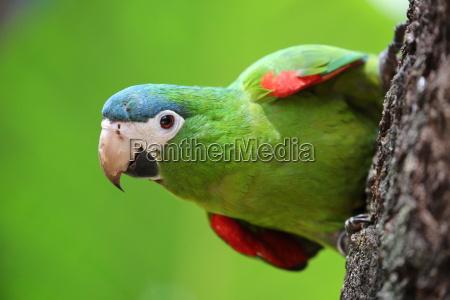 brasiliansche birdlife