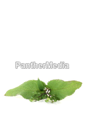 fresh green healing bei xuan shen