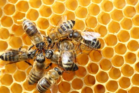 several honey collectors