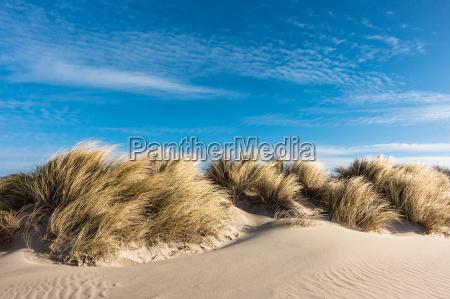 dune on the baltic sea