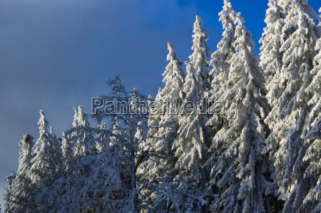 winter impressions in sauerland