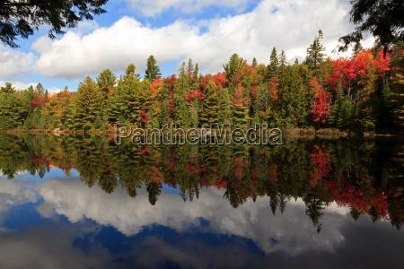 lovtrae efterarsblade bred skov lov natur