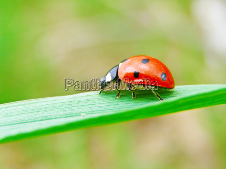 a ladybug on a green leaf