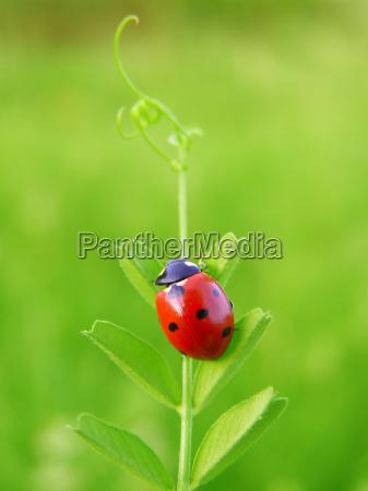 a ladybug climbing on a green