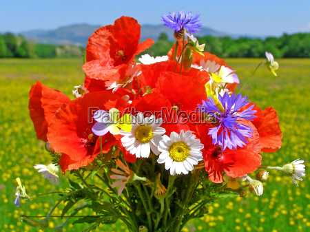 bright colorful bouquet of garden and