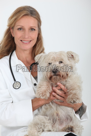 vet with a small dog