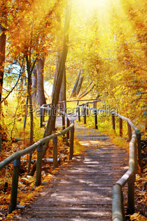 forest away in the fall of