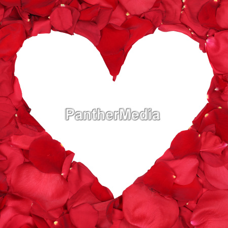 rose petals forming heart theme of