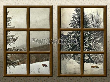 a winter view through a wood