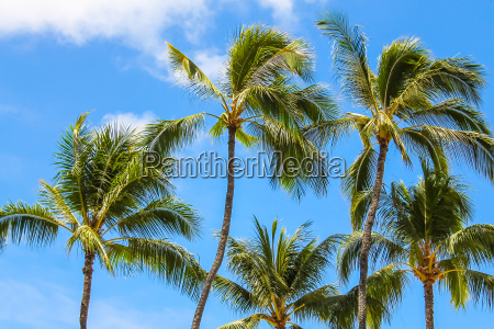 palmtrees against the blue sky