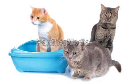 three cats beside cat litter box