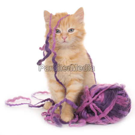 kitten with wool ball