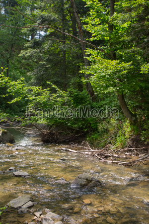 peaceful forest stream flows down among
