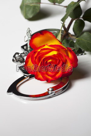handcuffs with a rose