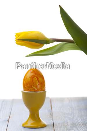 yellow tulip and egg