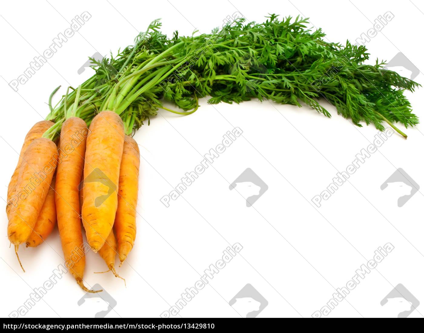 carrot - 13429810