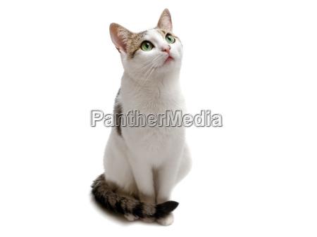 sitting, cat - 13430712