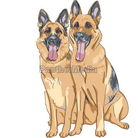 vector color sketch two dog german